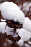 Etude della neve di inverno Immagini Stock