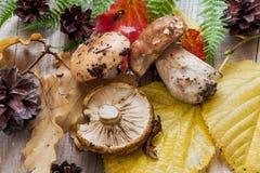 Etude di autunno con i funghi Fotografia Stock