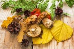 Etude di autunno con i funghi Immagine Stock Libera da Diritti