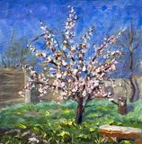 Etude, oil painting. Spring flowering apricot tree in the garden. Green grass, a fence of a blue sky, white and red flowers on a t royalty free stock photo