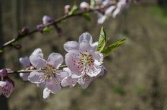 Etudes de la primavera Fotografía de archivo libre de regalías
