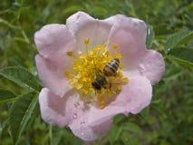 Etudes de la primavera Fotos de archivo