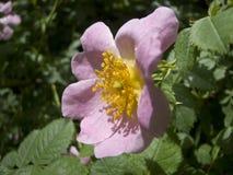 Etudes de la primavera Imagen de archivo libre de regalías
