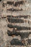 Etwas Haut des Kokosnussbaums brannte hölzerne Beschaffenheit stockbild