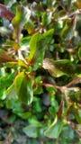 Etwas Tautropfen auf kleinen Blättern Stockfoto