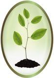 Etykietka z młodą rośliną. Obrazy Stock