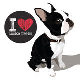 Eu amo Boston Terrier Fotos de Stock Royalty Free