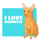 Eu amo Budweis Fotografia de Stock