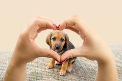 Eu amo cães Fotos de Stock Royalty Free