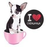 Eu amo a chihuahua Foto de Stock