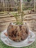 Eu amo crescer a flor da estrela fotografia de stock royalty free