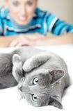 Eu amo gatos fotografia de stock