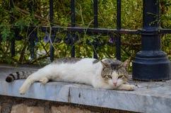 Eu amo gatos Fotos de Stock