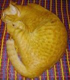 Eu amo o gato do ouro da senhora imagens de stock