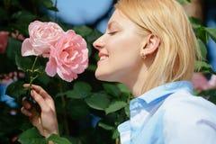 Eu amo rosas Jovem mulher em florescer o arbusto cor-de-rosa O cheiro bonito da mulher aumentou flores no jardim do verão Mulher  imagens de stock royalty free