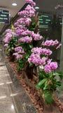 Eu amo Singapura com flores fotografia de stock royalty free