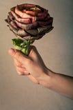 Eu dar-lhe-ei uma flor da alcachofra Vegetariano, conceito do vegetariano Mão Fotografia de Stock