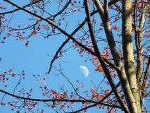 Eu espero que há uma mola na lua fotografia de stock