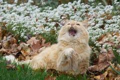 Eu não penso assim que digo o gato de gato malhado Foto de Stock Royalty Free