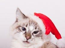 Eu sou Santa. imagens de stock royalty free