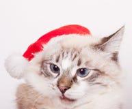 Eu sou Santa. Foto de Stock