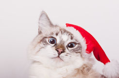Eu sou Santa. Fotografia de Stock Royalty Free