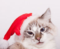 Eu sou Santa. Fotografia de Stock