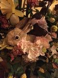 Eu ver dois coelhos Fotos de Stock Royalty Free