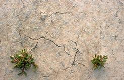 Eu vim no solo de argila com grama Fotos de Stock