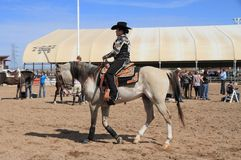 EUA, o Arizona: Cavaleiro no cavalo árabe Fotos de Stock Royalty Free