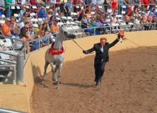 EUA, o Arizona: Mostra árabe do cavalo - vencedores Fotografia de Stock