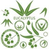 eucalipto Imagen de archivo libre de regalías