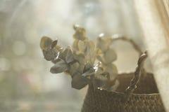 Eucalipto en cesta en verano Fotografía de archivo