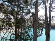 Eucalipto en la presa de España del sur foto de archivo libre de regalías