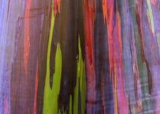 Eucalipto Tree2 do arco-íris Fotos de Stock Royalty Free
