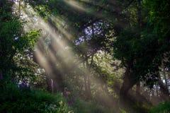 Eucaliptus contra castanhas Imagens de Stock