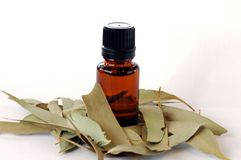 Eucalypt Essential Oil Royalty Free Stock Photos