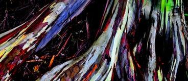 Eucalyptis树 库存图片