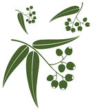 Eucalyptus stock illustratie