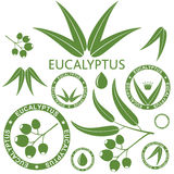 eucalyptus Royaltyfri Bild