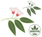eucalyptus Fotografia Stock Libera da Diritti
