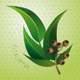 eucalyptus Images stock