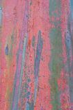 Eucalyptus Bark 3 Stock Image