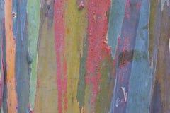 Eucalyptus Bark. Photo of Eucalyptus bark t the Waimea Valley Audubon Center on Oahu, Hawaii Royalty Free Stock Images
