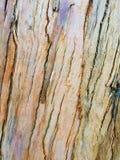 Eucalyptus bark royalty free stock photography