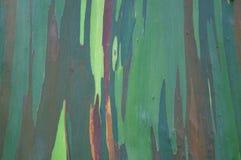 Eucalyptus bark close-up Stock Images