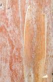 Eucalyptus Bark Stock Image
