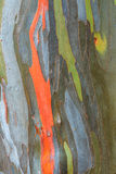 Eucalyptus Bark Texture Royalty Free Stock Photos