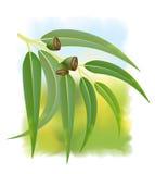 Eucalyptus branch on white background. Vector illustration Royalty Free Illustration