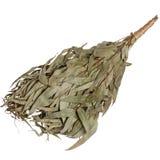 Eucalyptus broom for a bath isolated Stock Photography